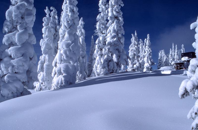 Niseko Powder Ski