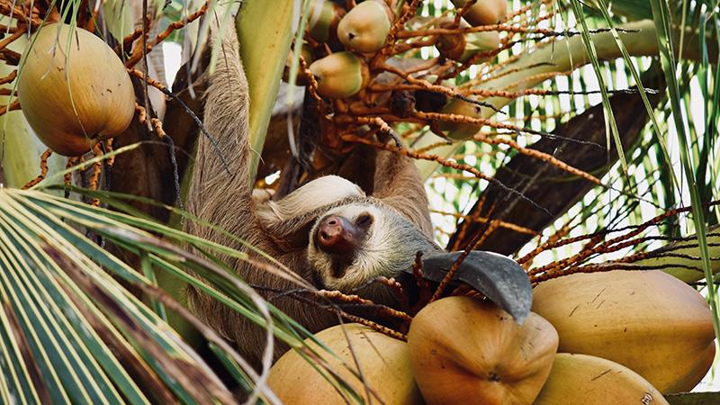 sloth-3377040.jpg