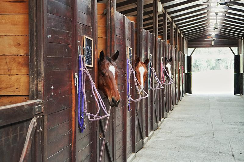 horsespvblog.jpg
