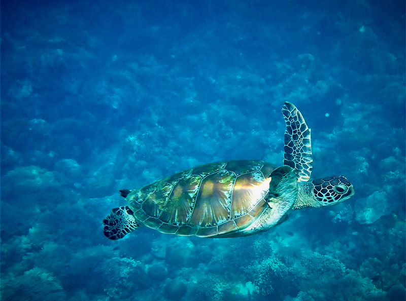 turtle-stock.jpg