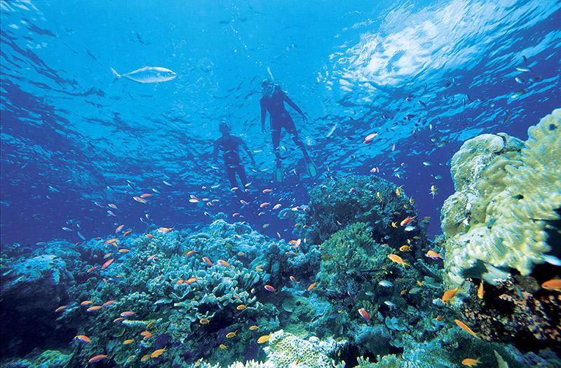 Great-Barrier-Reef-Snorkelers.jpg