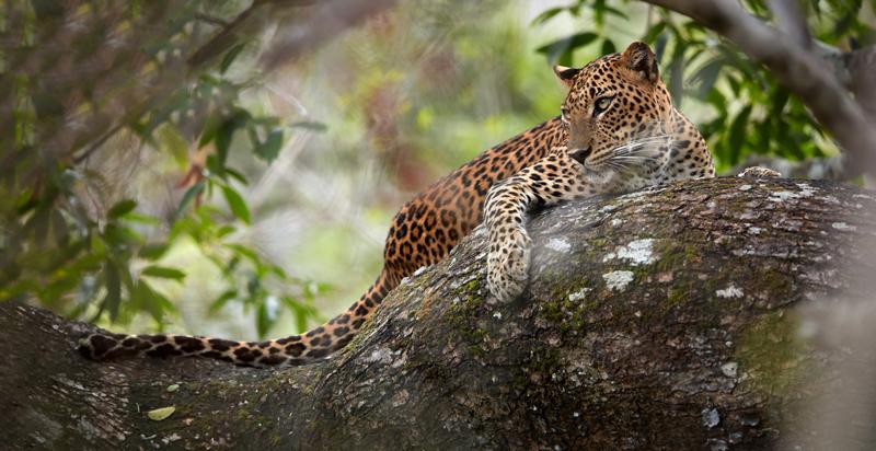 sri-lanka-yala-national-park.jpg