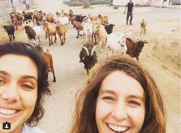 Goat Selfie, Neot Smadar