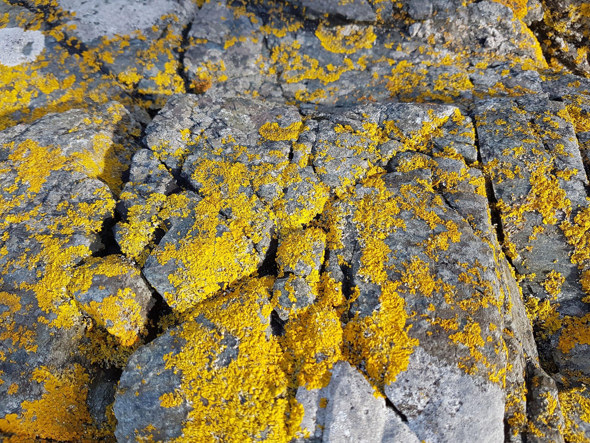 Burns, R. (2017)  Lichen on Rocks, Port Charlotte. (Own collection)