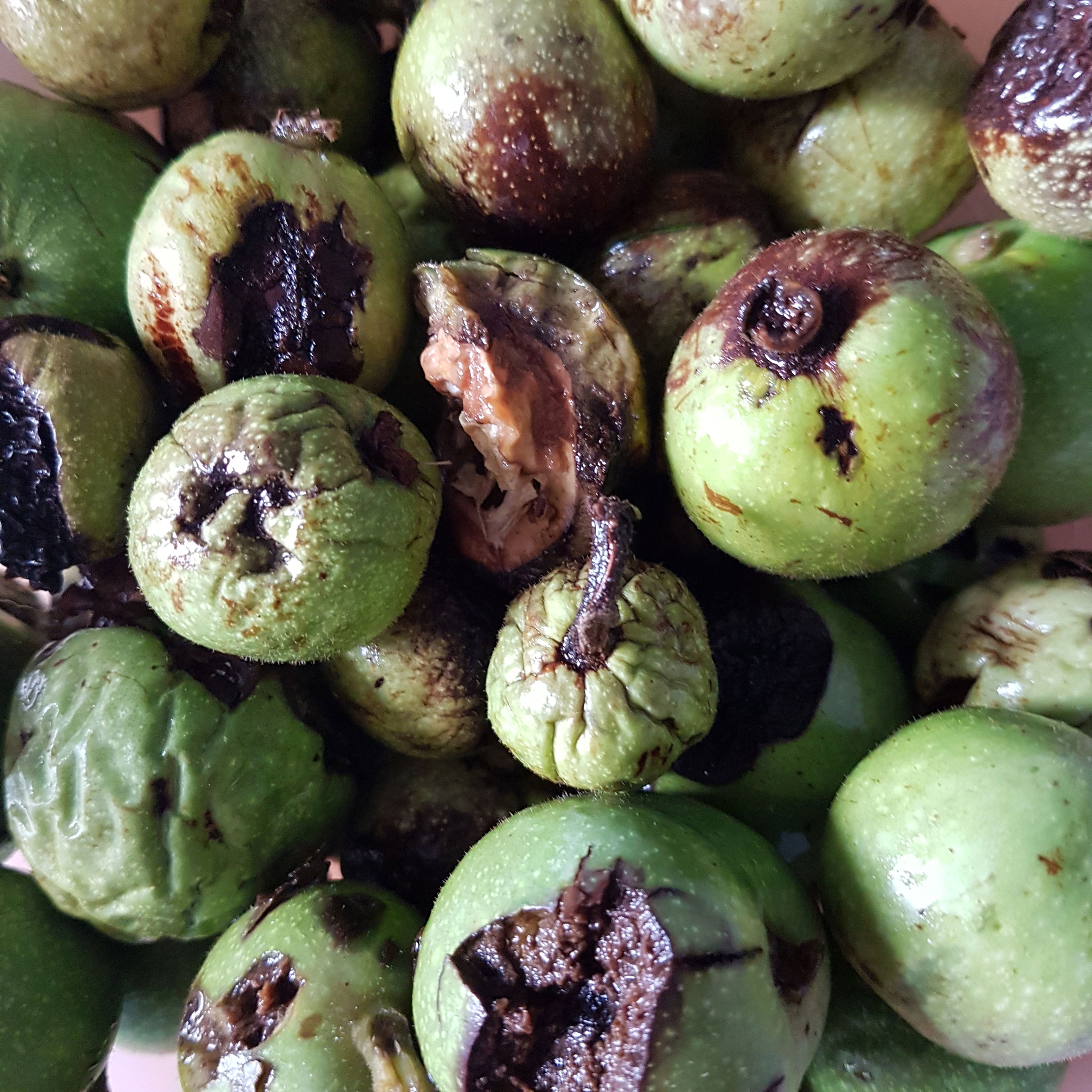 Burns, R. 2018. Fresh Walnuts 2. Photograph.