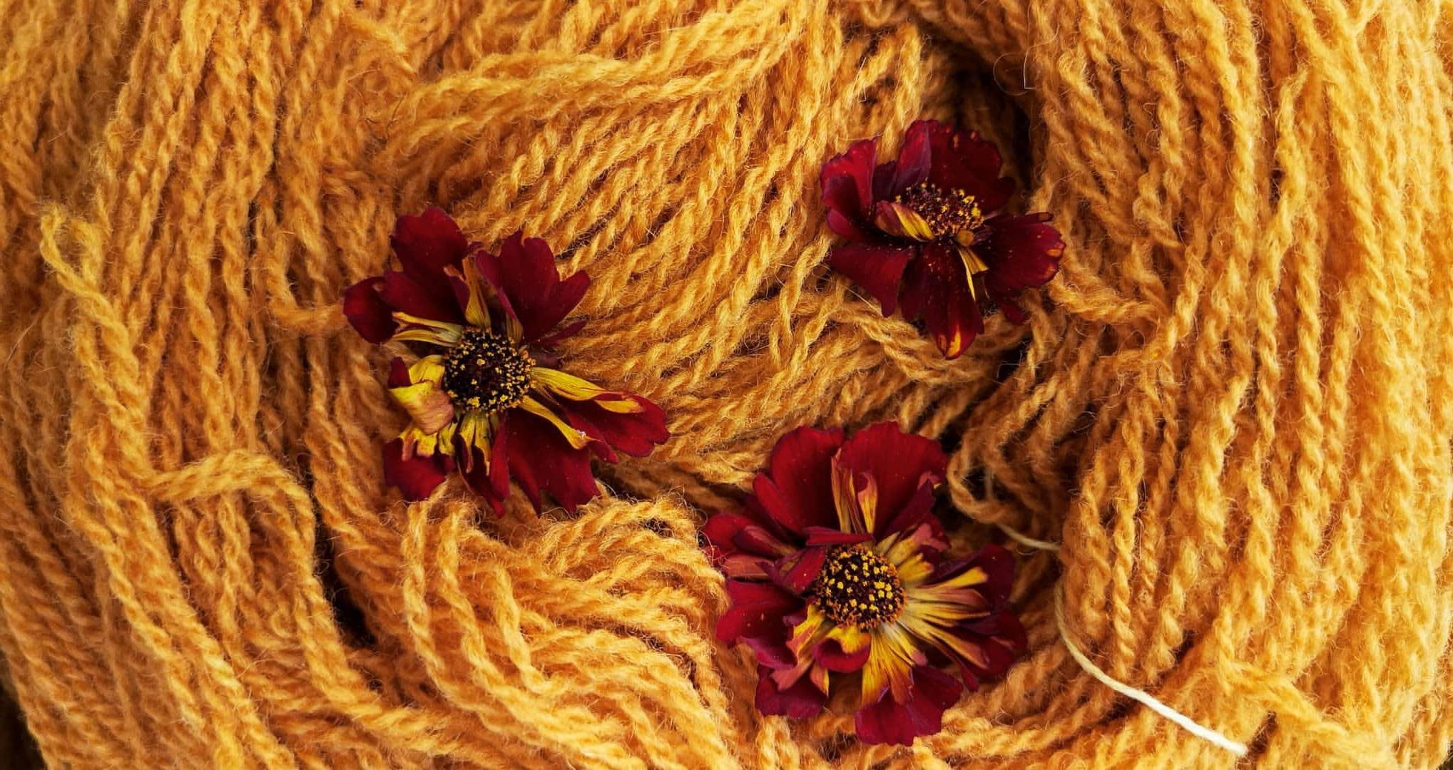 ria-burns-knitwear-coreopsis-tinctoria-roulette-flower-dye-6.jpg