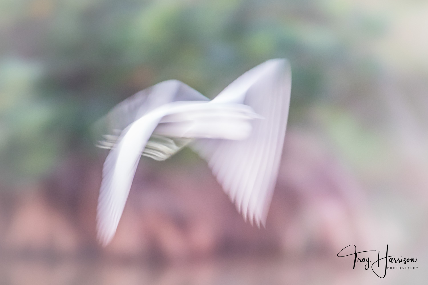 1 - Motion Blur, Everglades 2018, img 1130.jpg