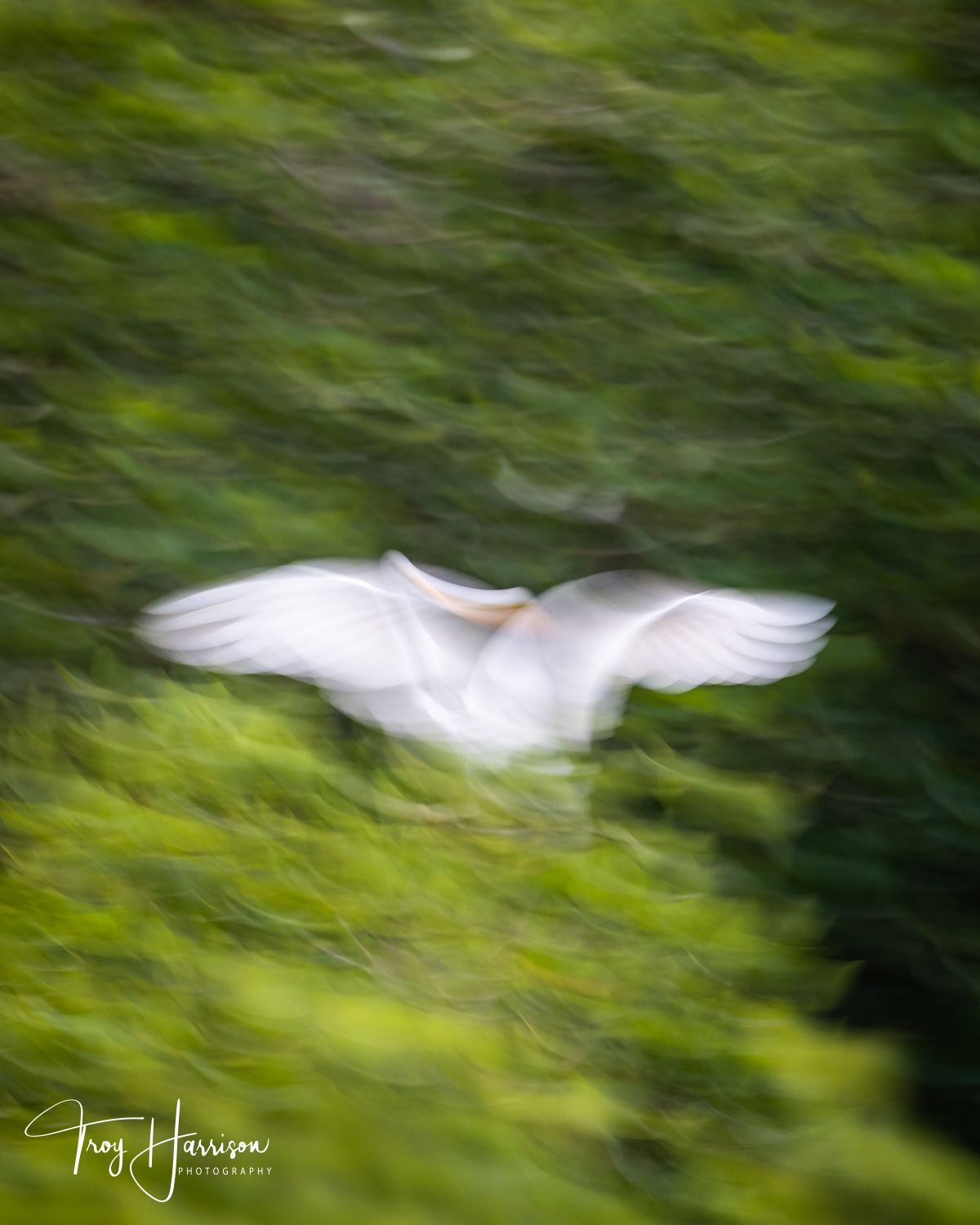 1 - Motion Blur, Everglades 2018, img 1506.jpg