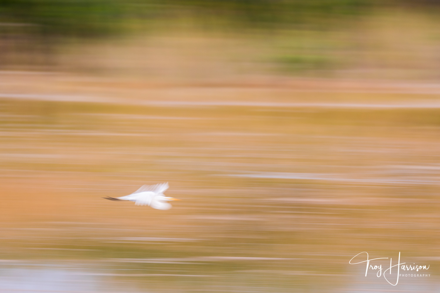 1 - Motion Blur, Everglades 2018, img 1560.jpg