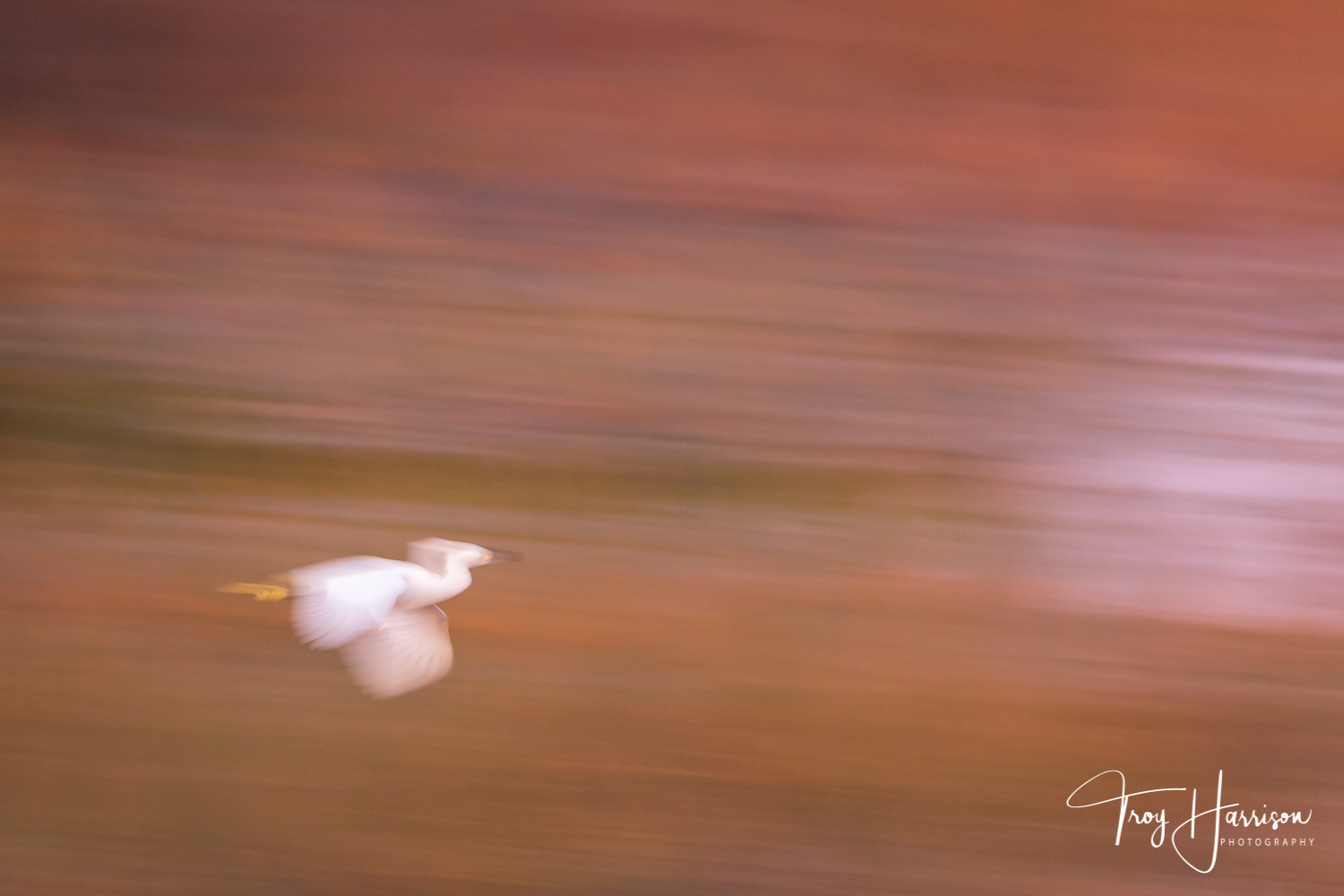 1 - Motion Blur, Everglades 2018, img 2290.jpg