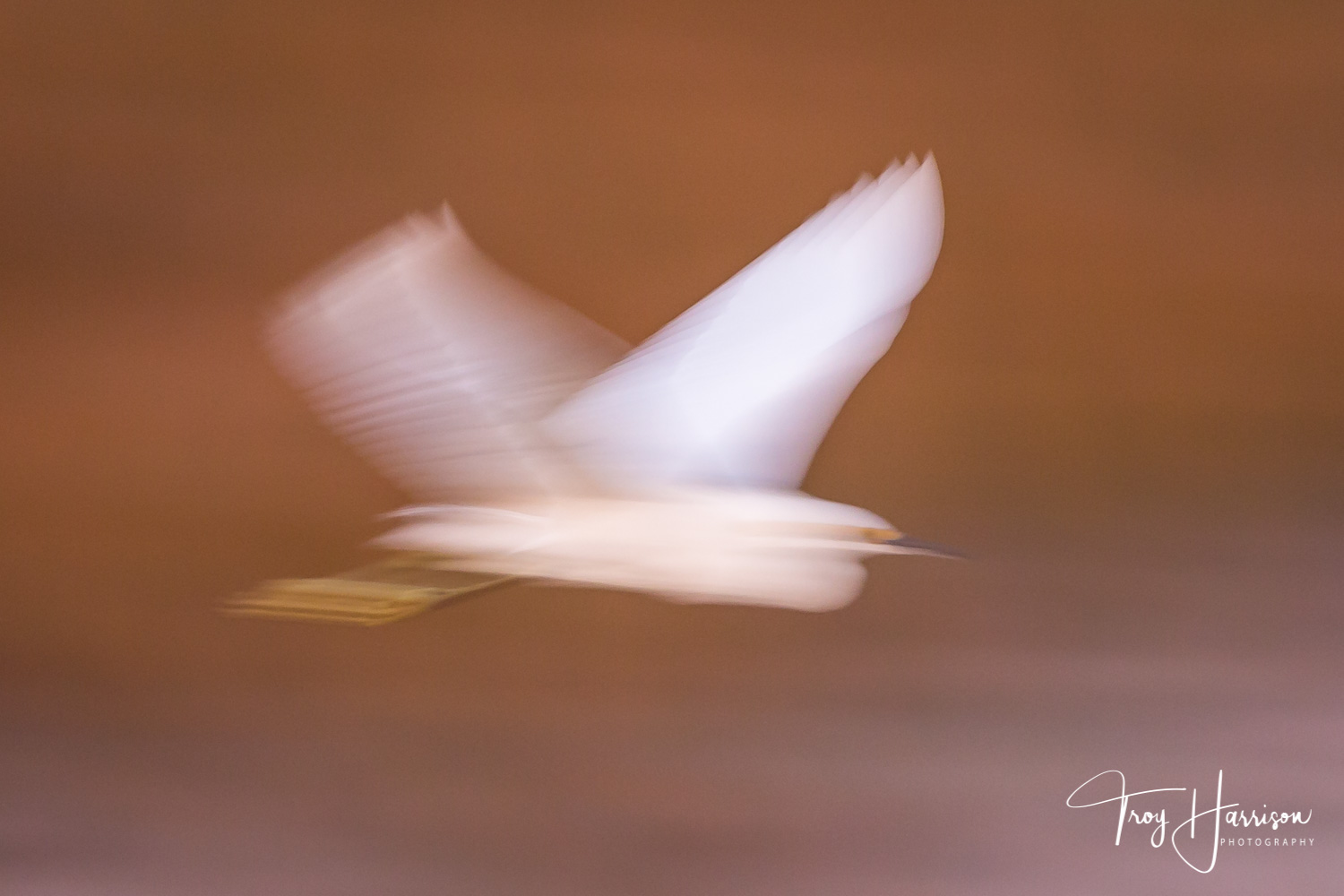1 - Motion Blur, Everglades 2018, img 2297.jpg