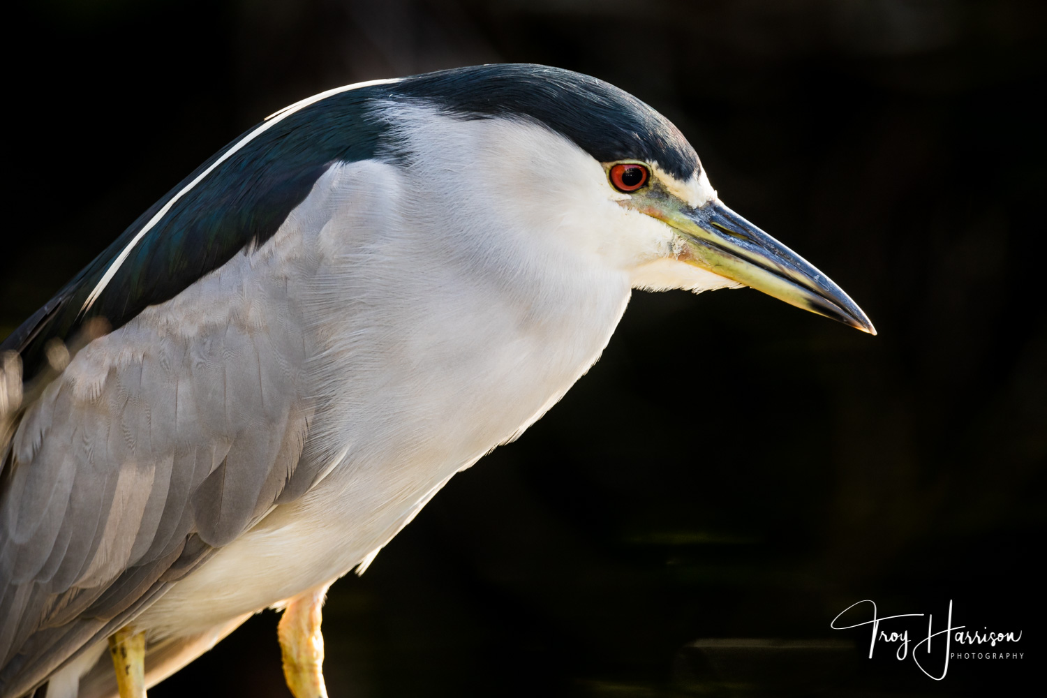1 - Night Heron, Everglades, Nov. 2018, img 517.jpg