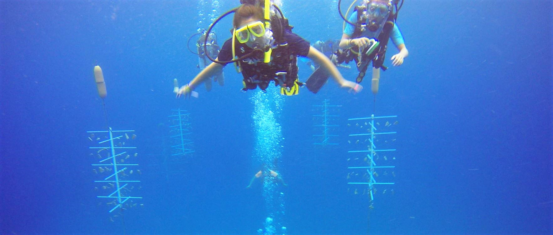 """Coral Restoration - The Roatan Institute for Marine Sciences installed 12 """"trees"""" to cultivate coral for restoring the reef.Students learn about coral propagation in the classroom and then dive the coral nursery. They earn service hours by cleaning the infrastructure that supports healthy young colonies."""