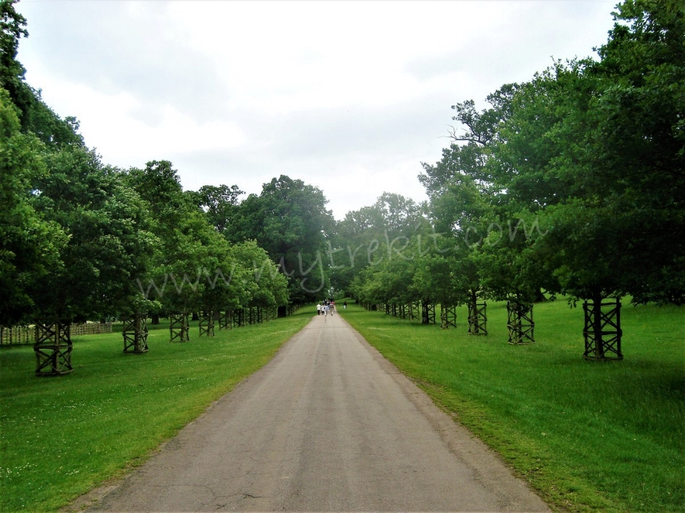 The special tree-lined Avenue from the gates of Althorp to the heart of the estate.