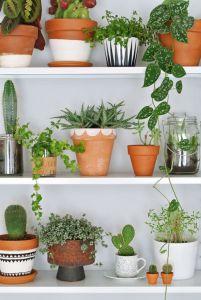 cacti+4.jpg