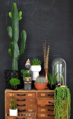 cacti+5.jpg