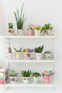cacti+6.jpg