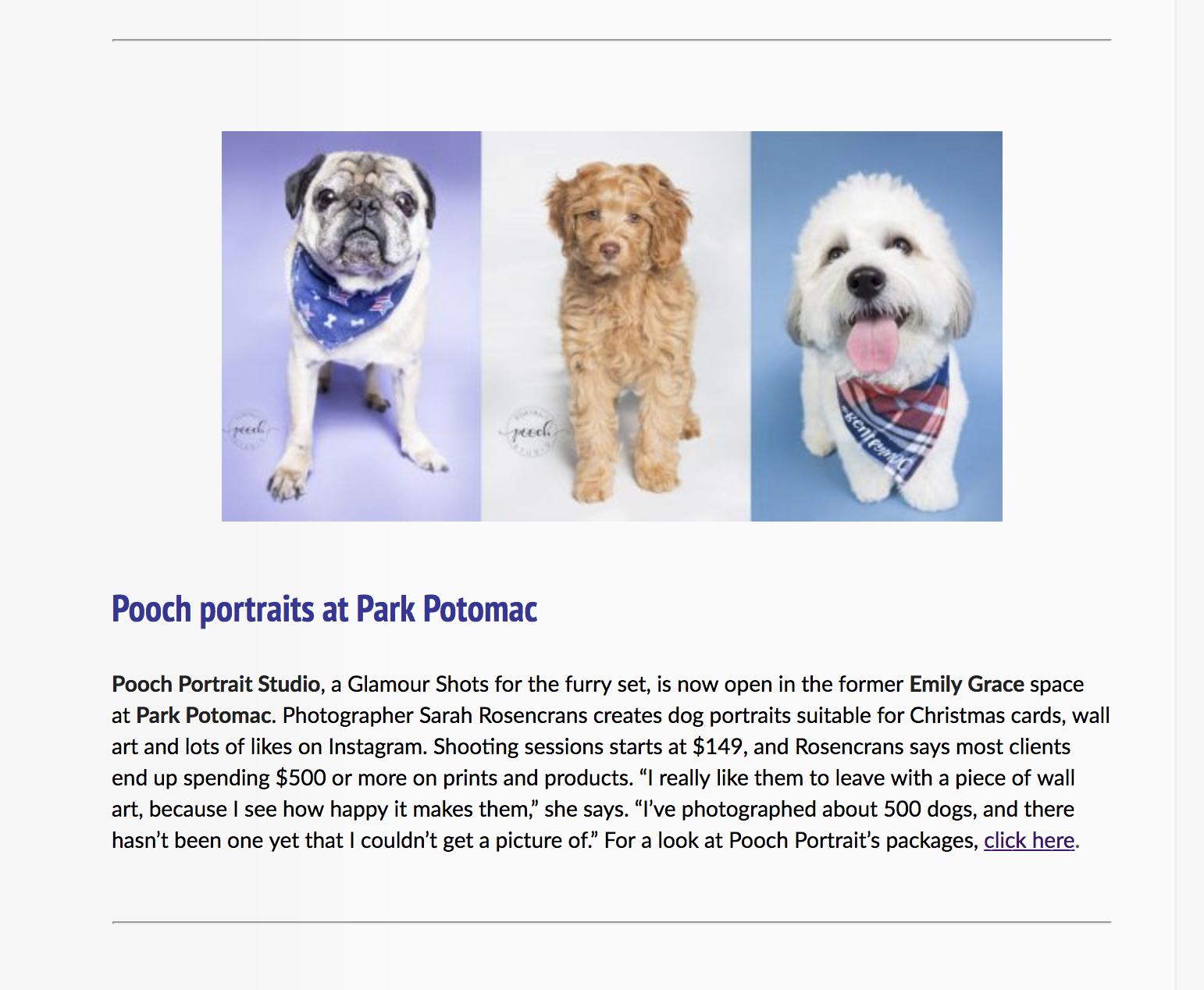 Pooch Portrait Store Rporter