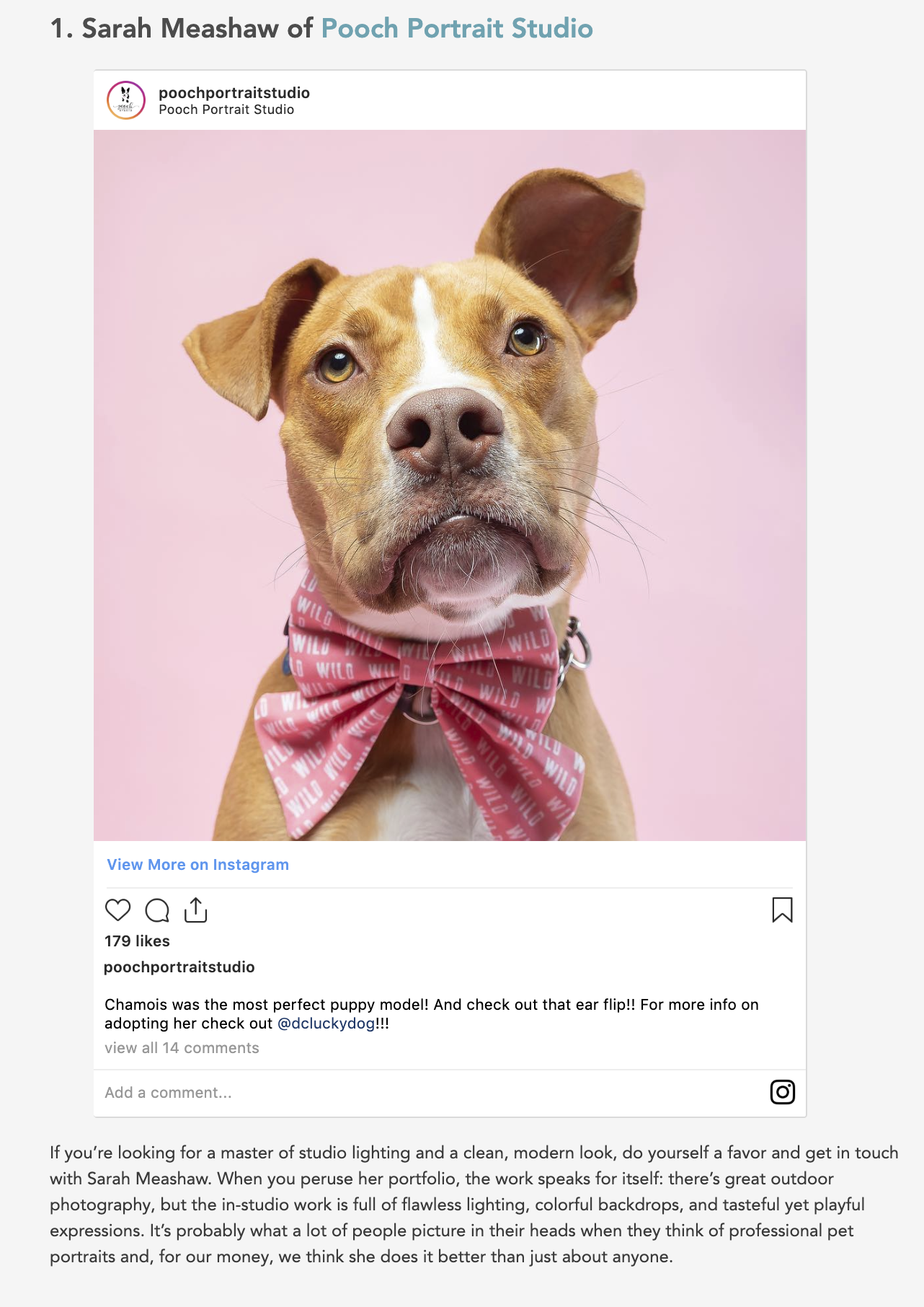 Best Pet Photographer in DC.png