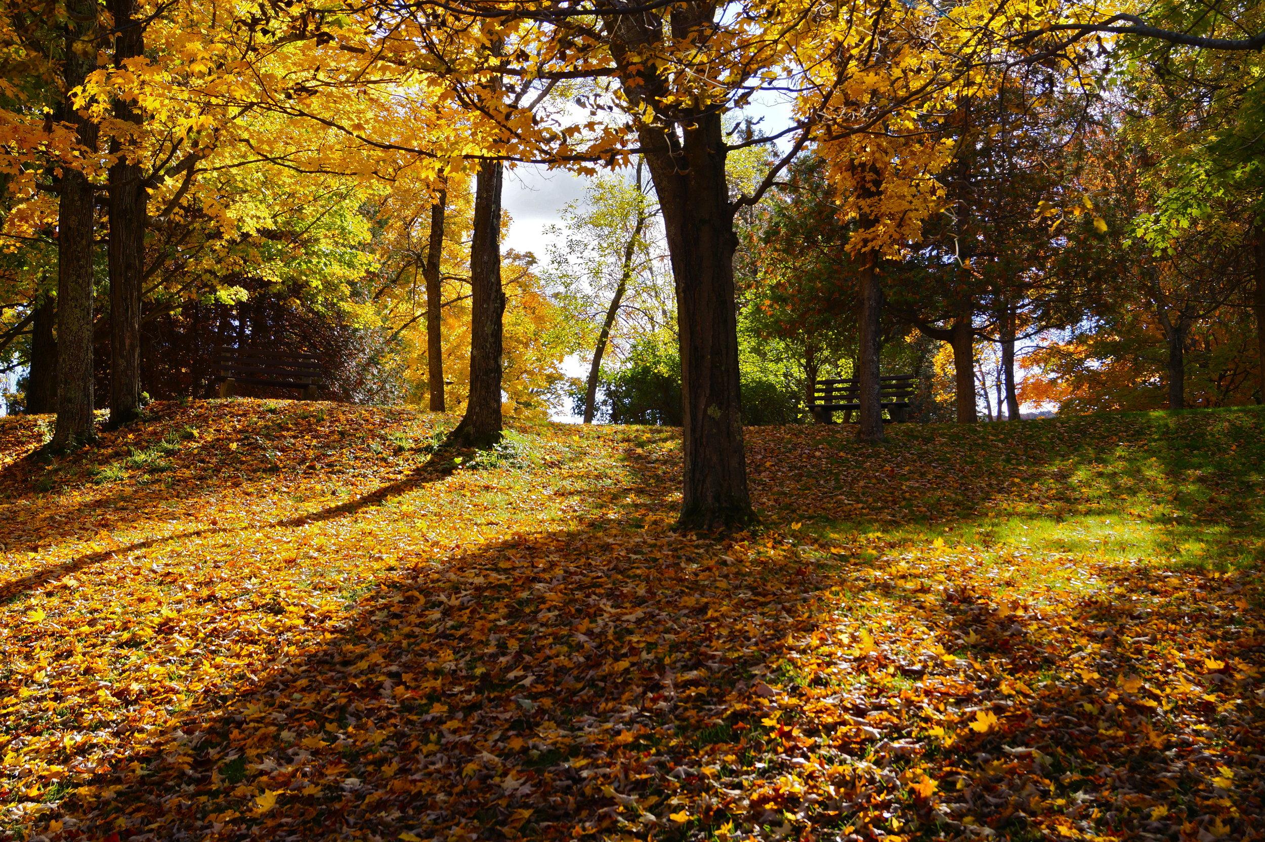 Chittenango Fall Day