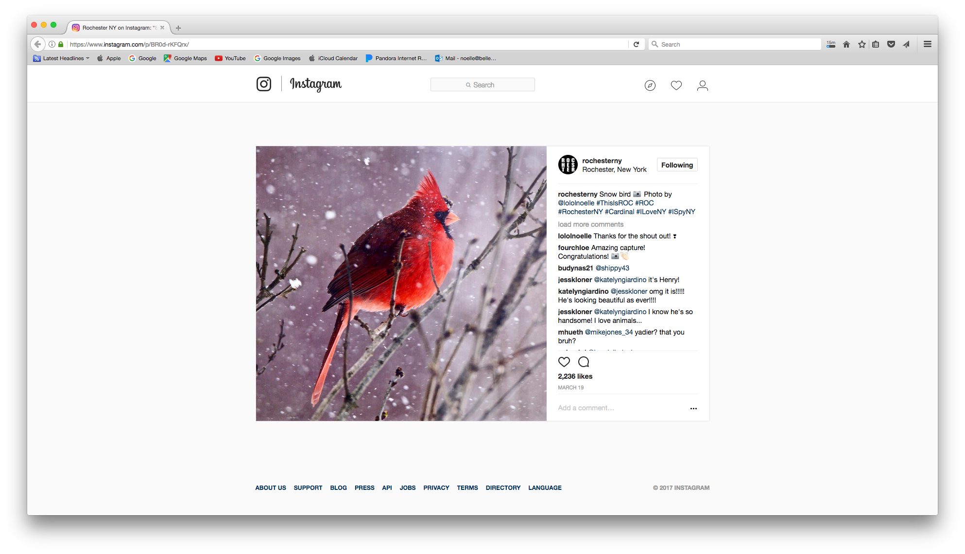 Rochester NY - The Rochester NY Instagram page shared this photo of a cardinal in one of our many snow storms.