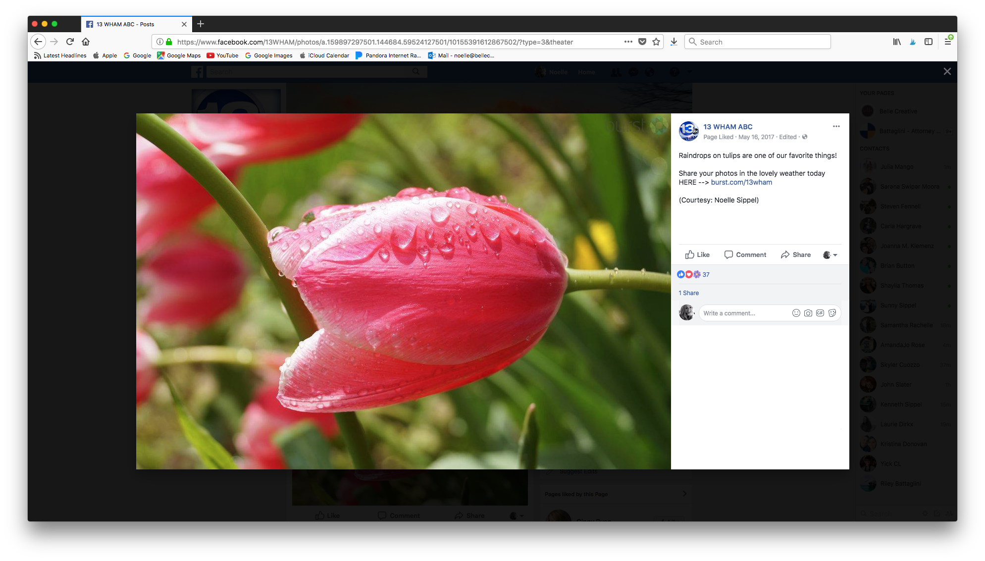 13 WHAM ABC - April showers bring May flowers! 13 WHAM ABC shared our photo of these rainy day May tulips on their Facebook page in May of 2017.