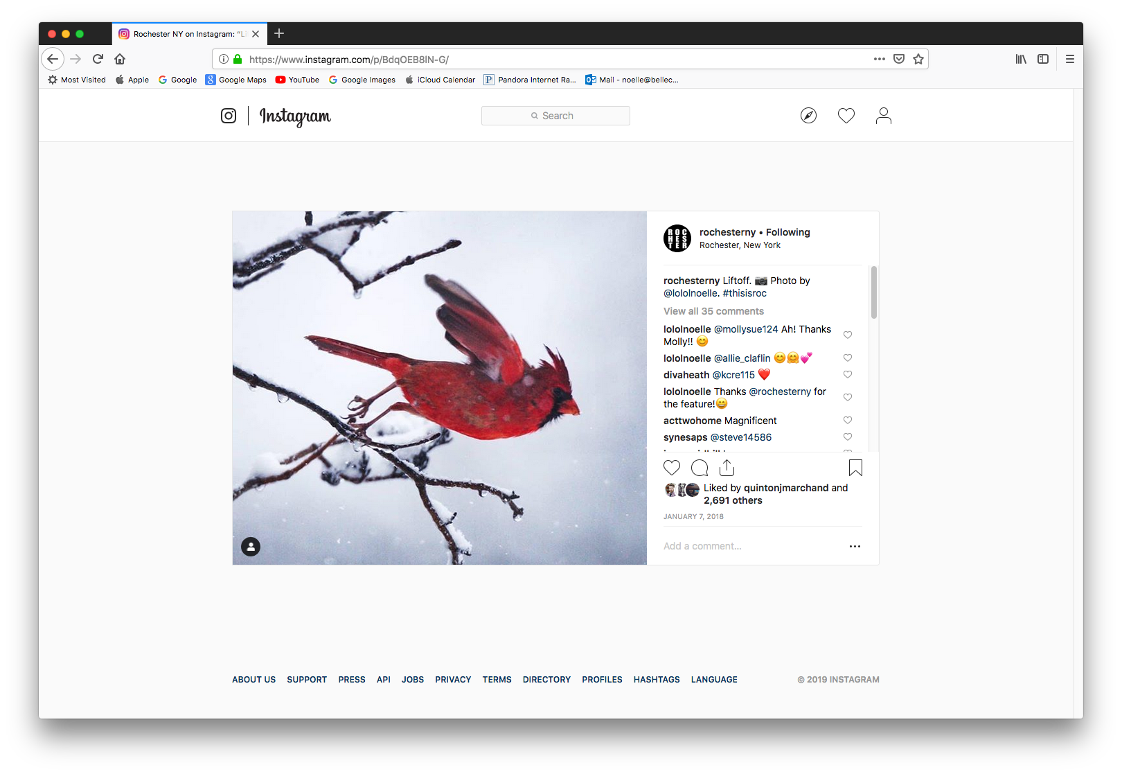 Rochester NY - The Rochester NY Instagram page shared our photo of this cardinal mid-liftoff in January of 2018.