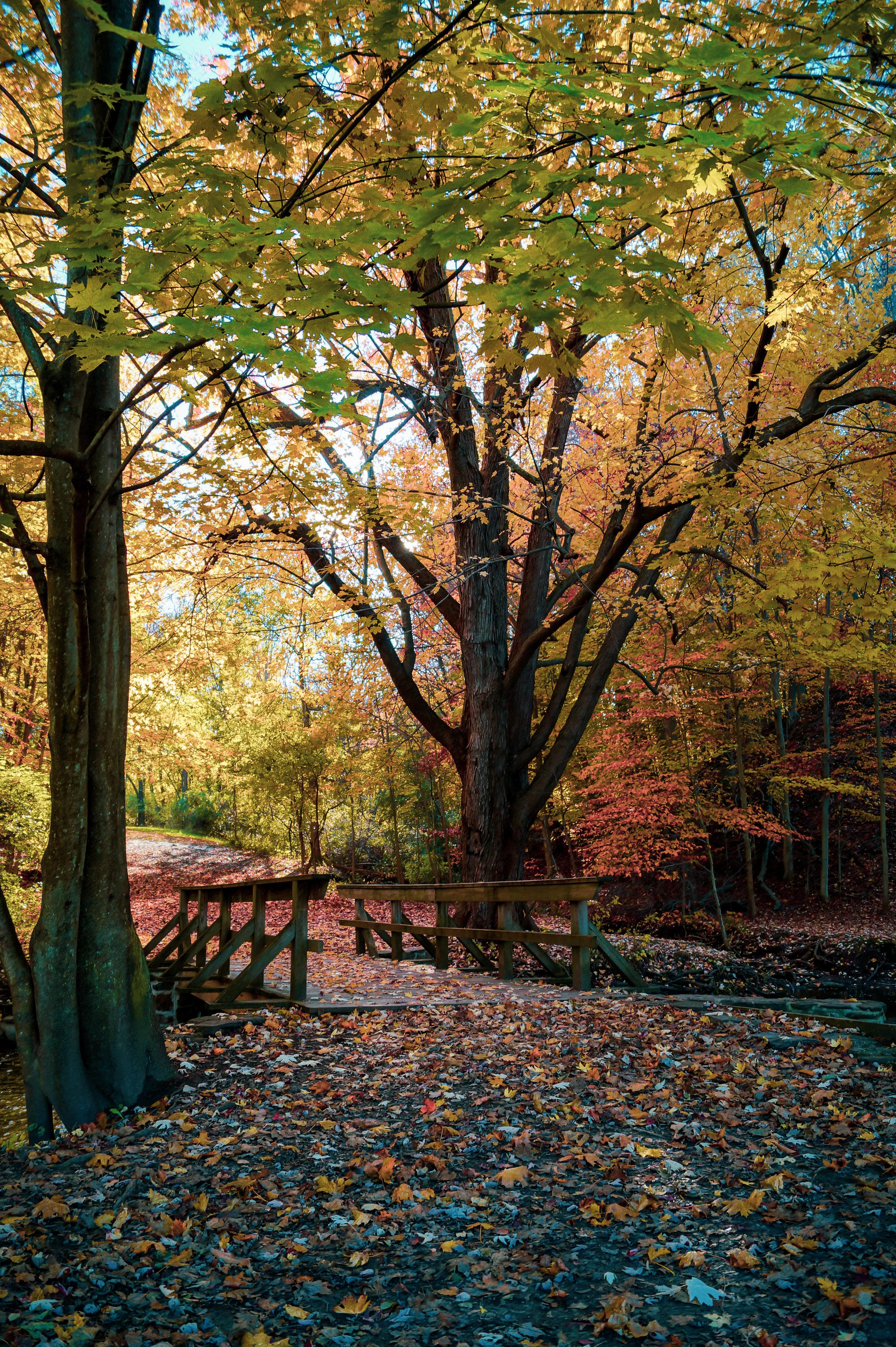 Perfect Fall Hike