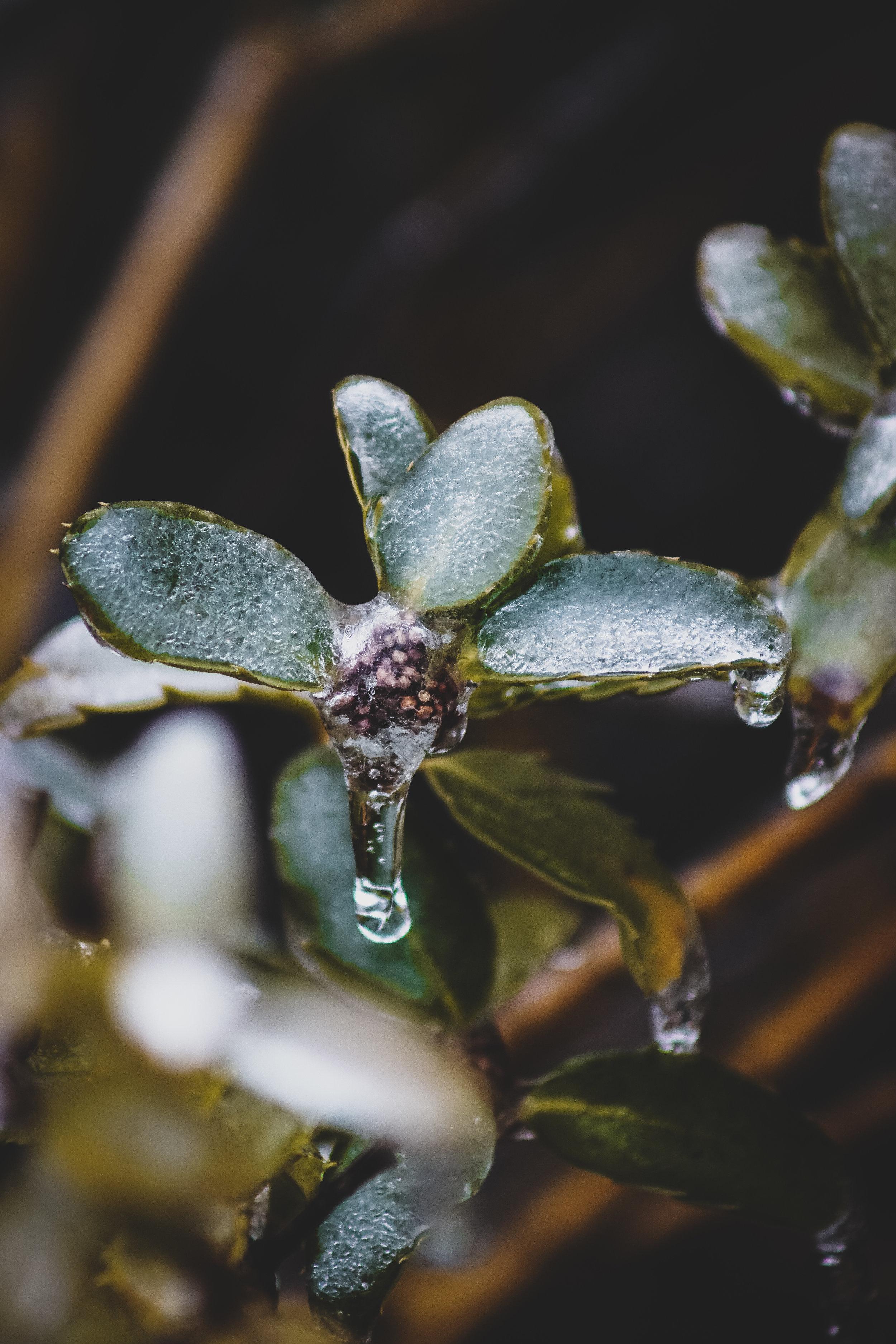 Freezing Rain's Glory