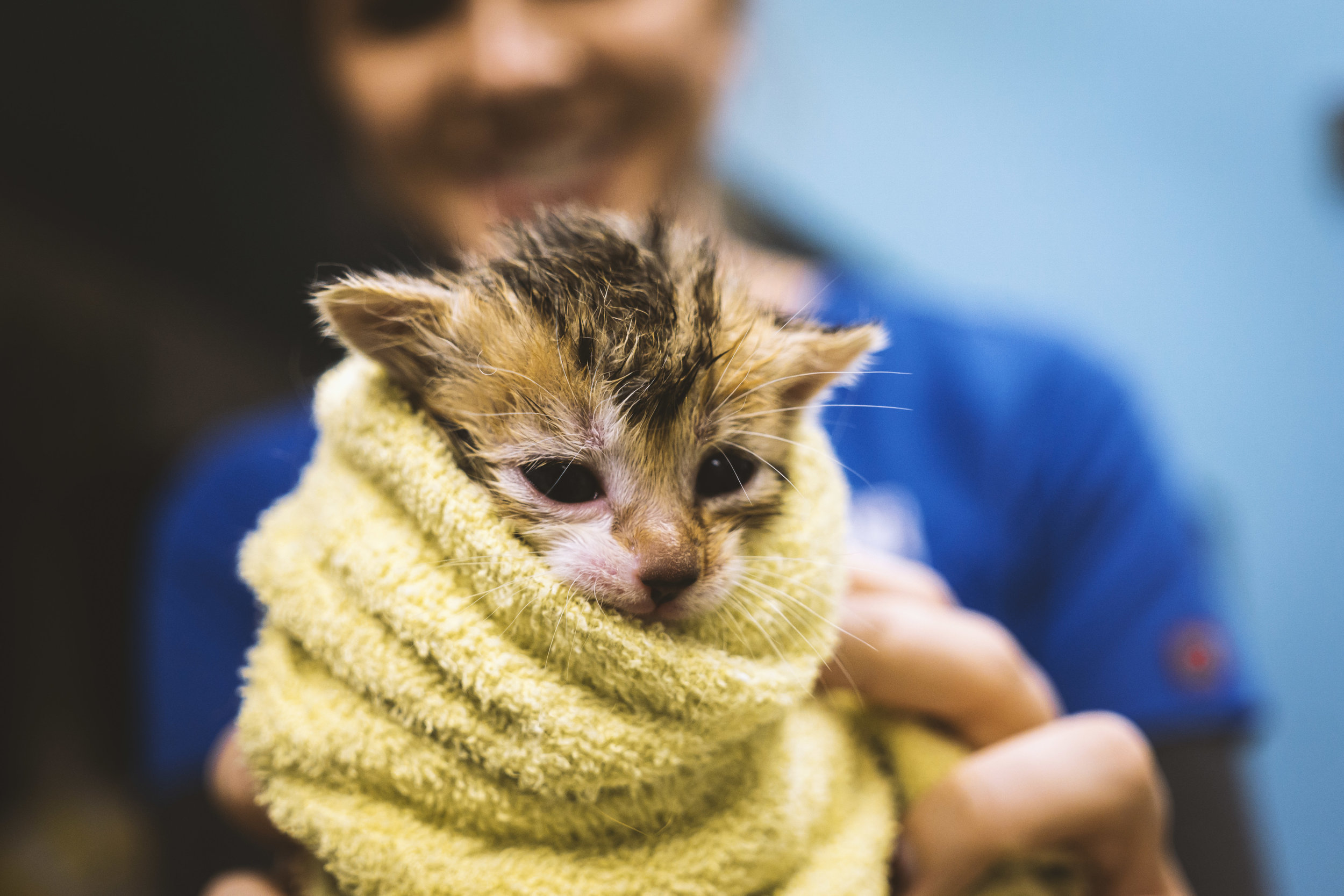 Kitten_towel_1.jpg