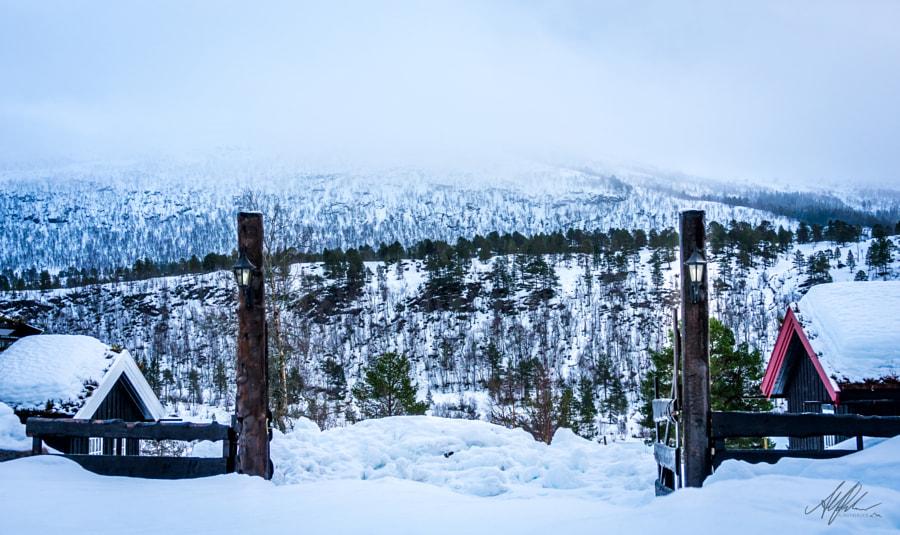 Enter Winter Here