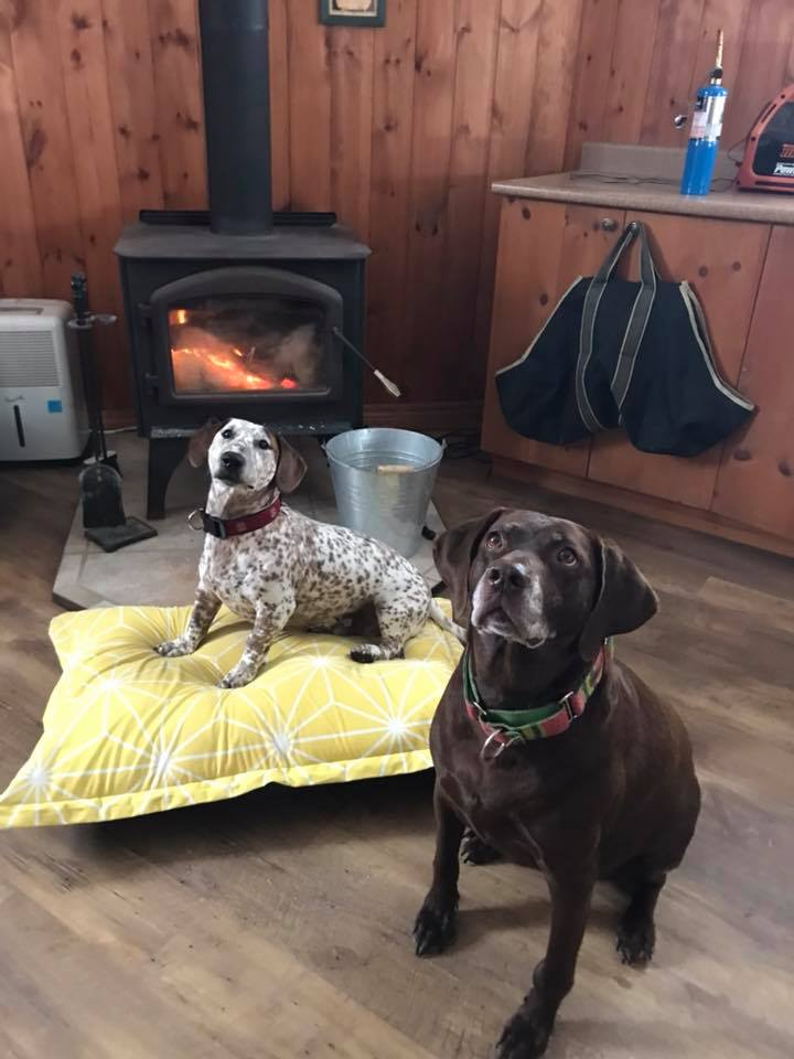 Harvard & Melon in front of the fire on a cold morning
