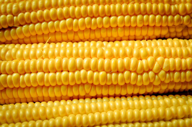 Corn 2 Foodshed Alliance 2017.jpg