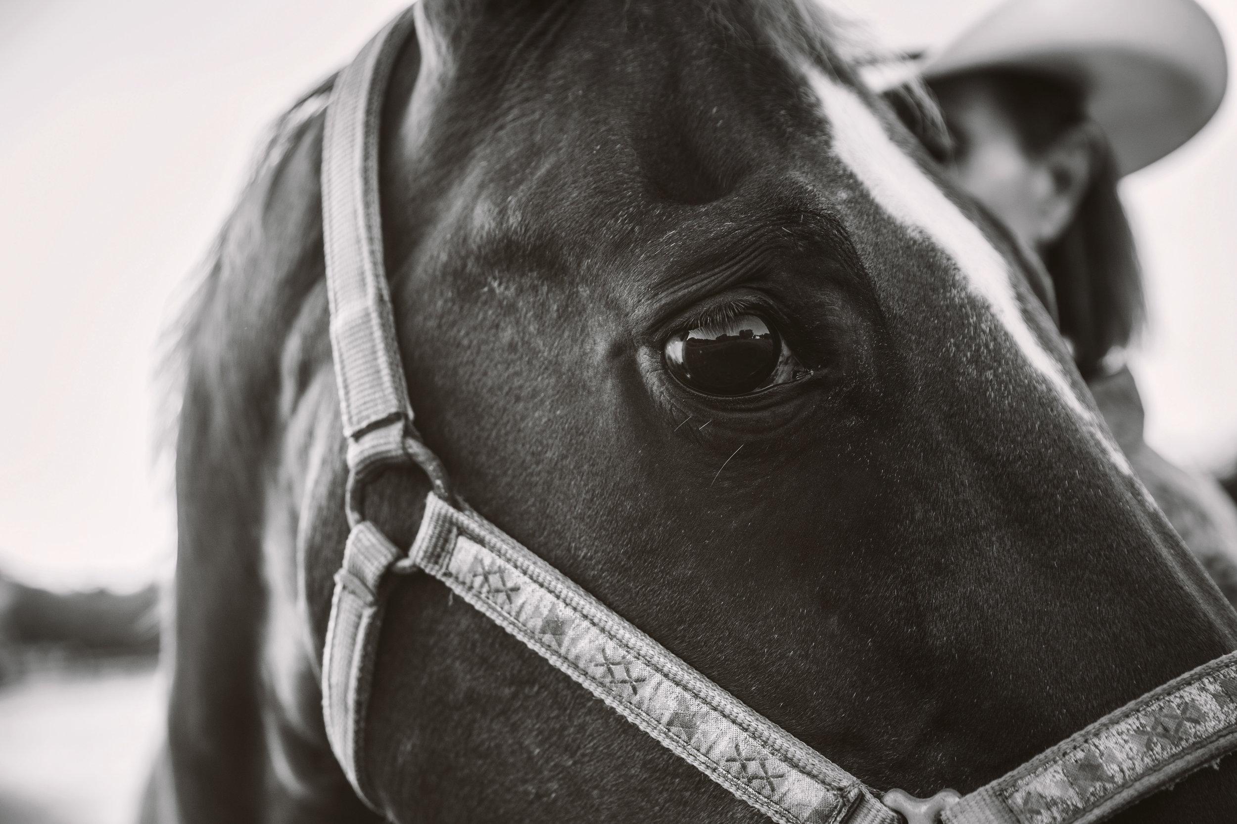 horse photographer in Nashville