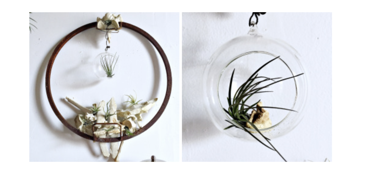 DIY air plant display