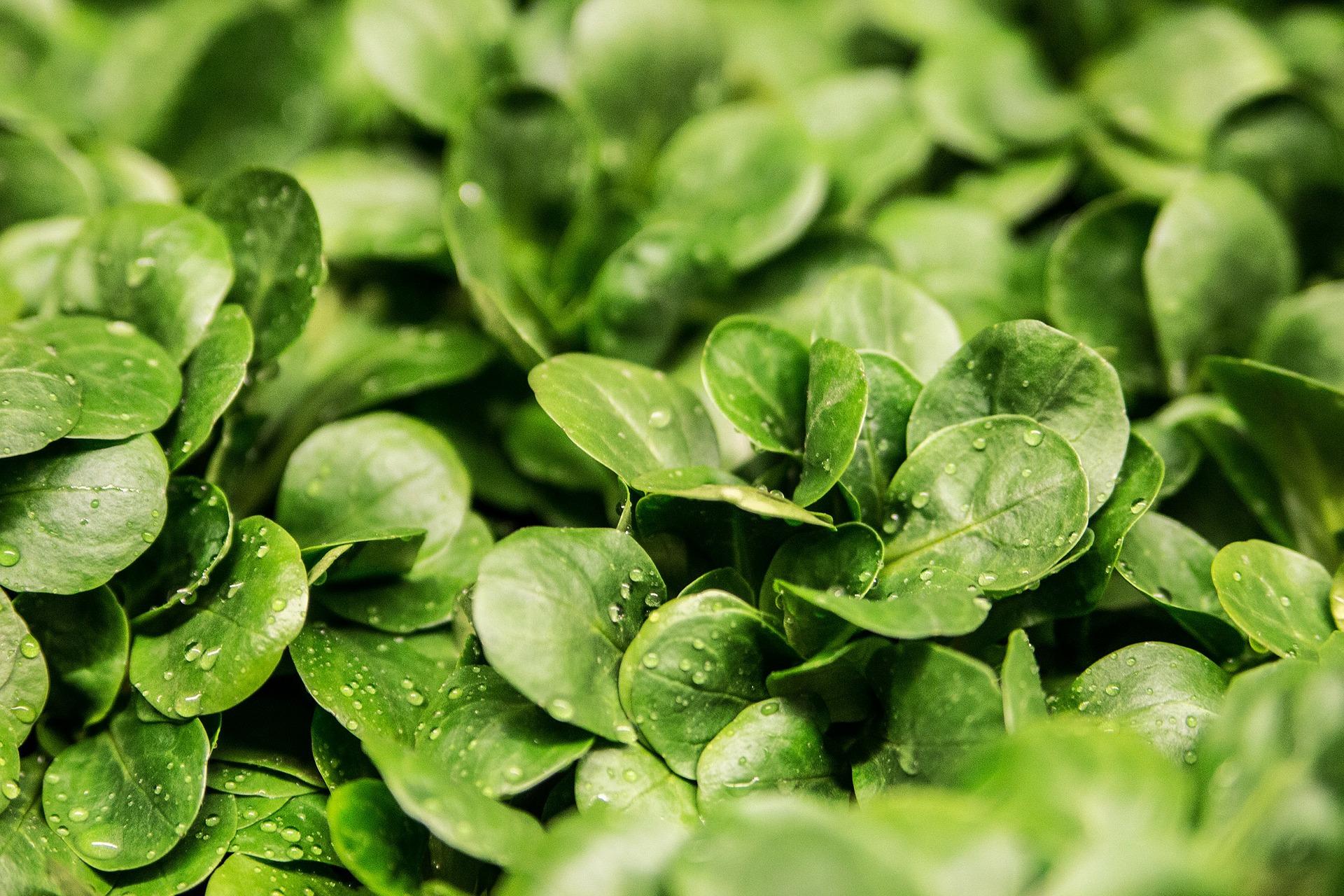 salad-264826_1920.jpg