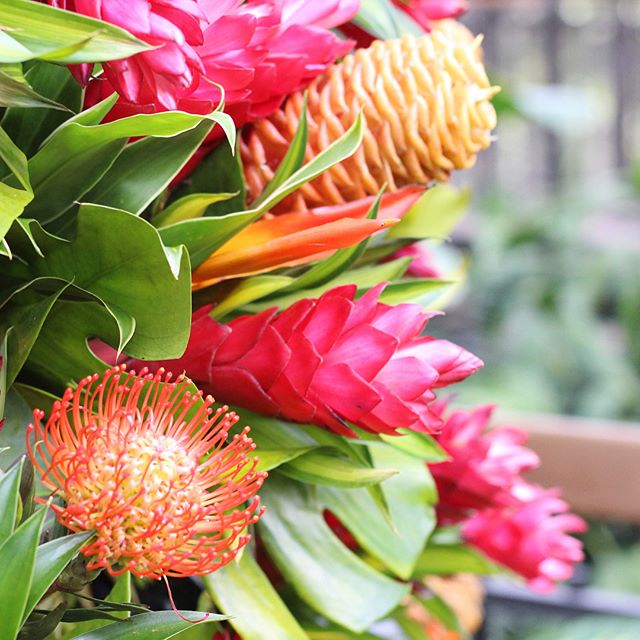 Last week I went to @longwoodgardens with some friends and everything was so beautiful. One of my favorite things was this amazing fresh cut tropical flower Christmas tree- it was gorgeous! I loved all of the bright orange & pink flowers. It's made of palm fronds & over 100 floral arrangements that are replaced throughout the season.  #acolorstory  #decemberreflections2018  #happier2018  #happierpodcast #livethelittlethings  #nothingisordinary