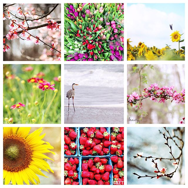 """Dear world, I am excited to be alive in you, and I am thankful for another year."" ~Charlotte Eriksson  The first photo is of my best nine Instagram pictures of 2018- the ones that had the most likes. It got me curious to see what other types of photos I took throughout the year, so I went back and grouped them in categories. There were ones of beautiful skies (blue sky & puffy white clouds and also the pinks & oranges of gorgeous sunsets)...pictures of animals from my walks on the beach or around the lake or at the zoo (and ones where I pulled over on the side of the road)...there were, of course, many of the beach...there were some people shots as well (street photography & family)...and also photos that represent creativity & learning & trying new things. Thanks to everyone who liked or commented  on my captures...they're all really appreciated :) #acolorstory  #happier2018  #happierpodcast  #nothingisordinary  #livethelittlethings  #carveoutimeforart  #doitfortheprocess #mintedartist"