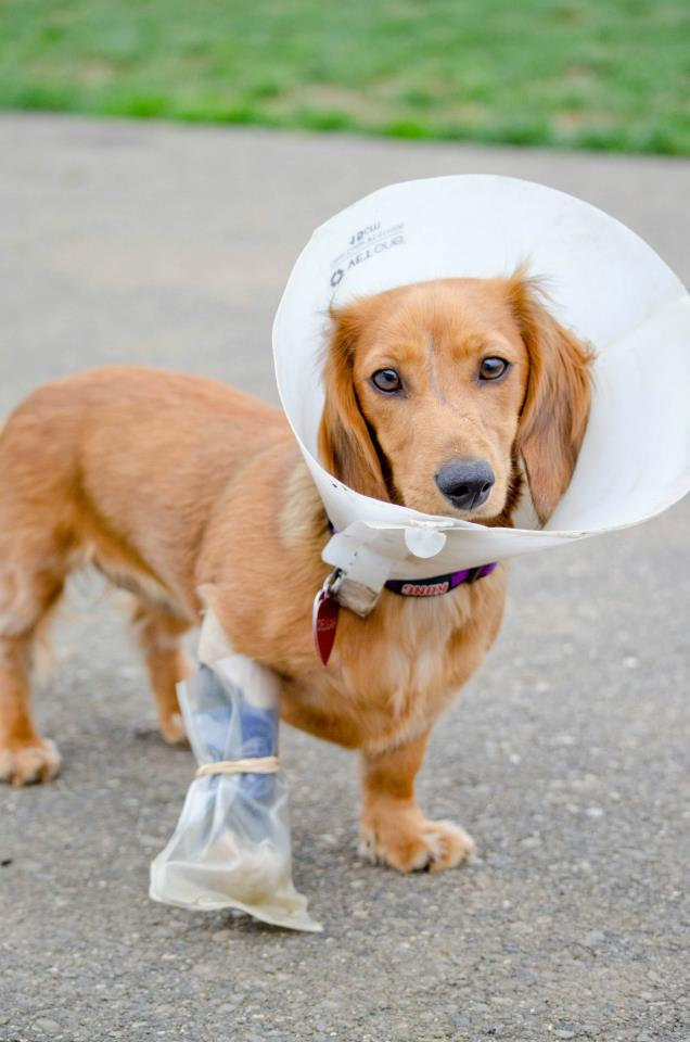 top-5-dog-injuries.jpg