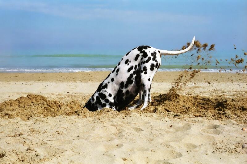 Digging Into Pet Insurance