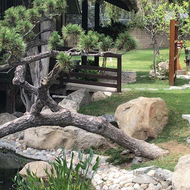懐かしいところ!ロサンジェルスにいながら少し日本にいるみたいな感じで楽しかったです❤️ I could watch the Koi fish swim forever—a true Zen, lovely space right in the heart of LA: the Tea House and Friendship Garden in Brand Park (Glendale)! Love to all! ❤️ #koifish #zenspacela #japanesegardeninla