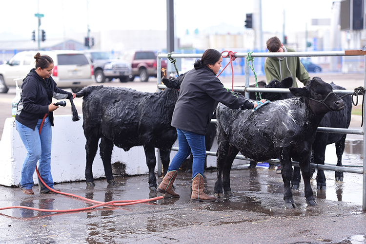 Photo courtesy of the Arizona National Livestock Show