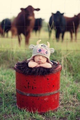baby red barrel cows.jpg