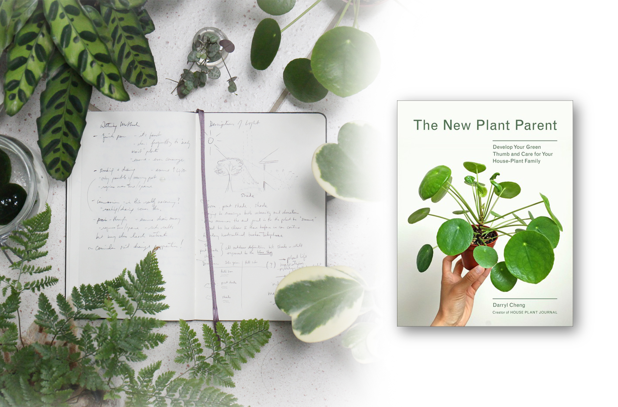 Develop Your Green Thumb and Care for Your House-Plant Family New Plant Parent