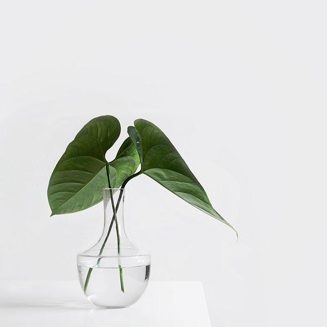 🍃🍃🍃 ⠀ ⠀ ⠀ #fashion #beauty #lifestyle #chic #lifestyleblogger #weekend #bblogger #bbloggers #saturday #inspiration #lovely  #chic #lazy #white #vase #minimalism #minimalist #sky #clouds #green #leaves #summer
