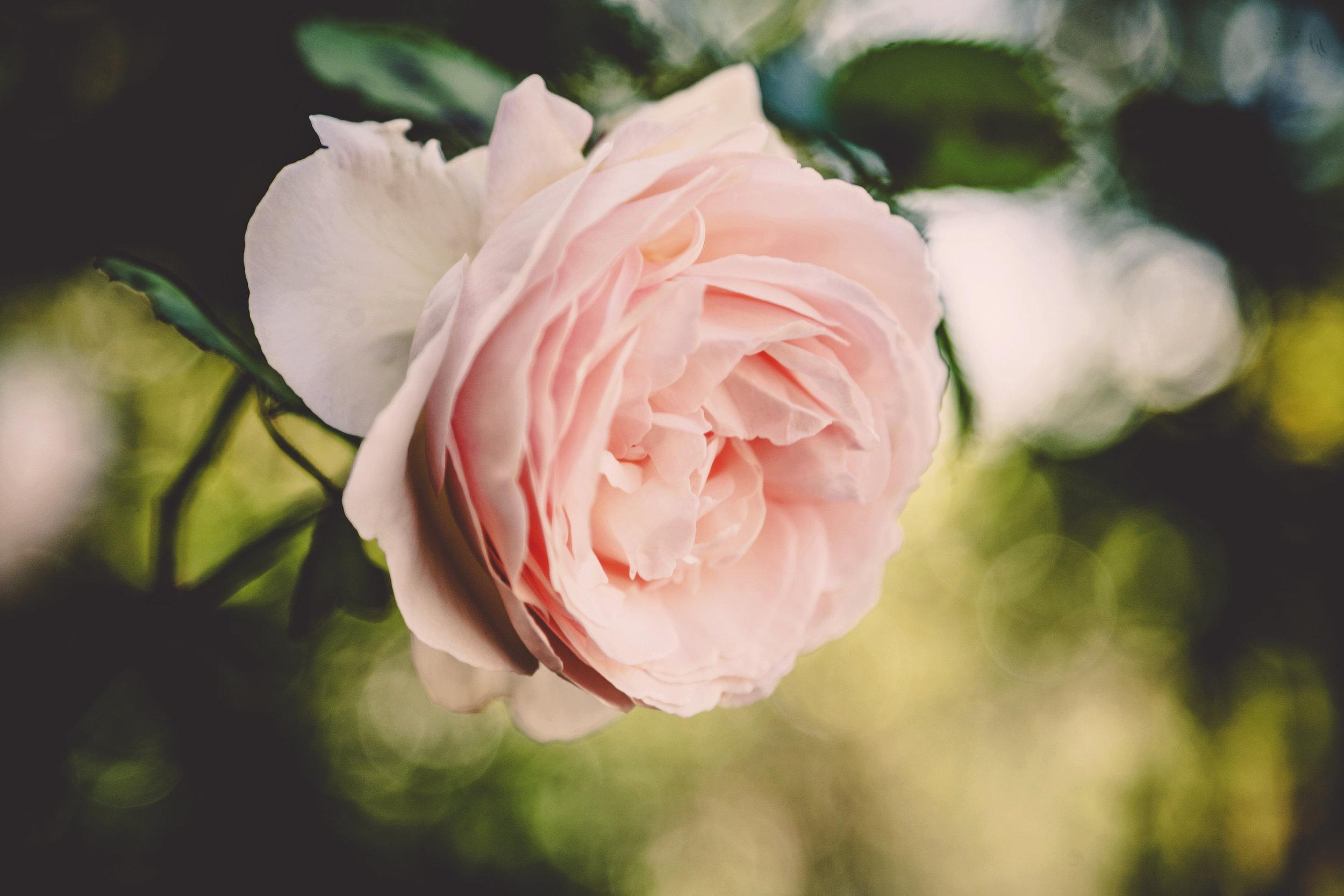 iseeyouphoto floral vol2 13.jpg
