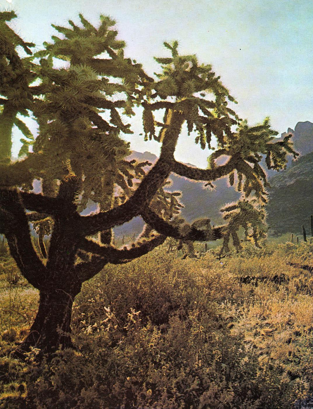 desert010.jpg