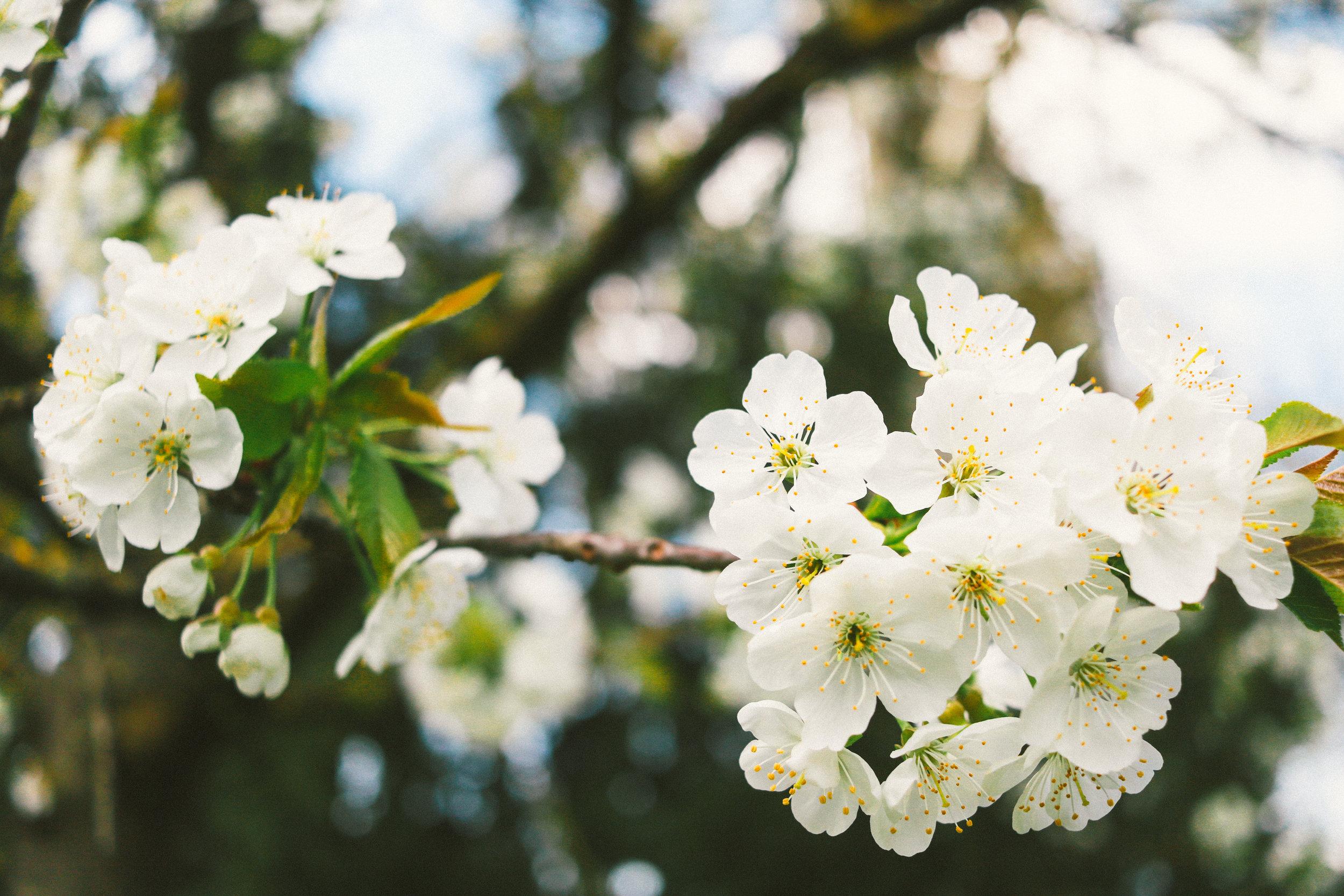 Spring-Florence-38.jpg