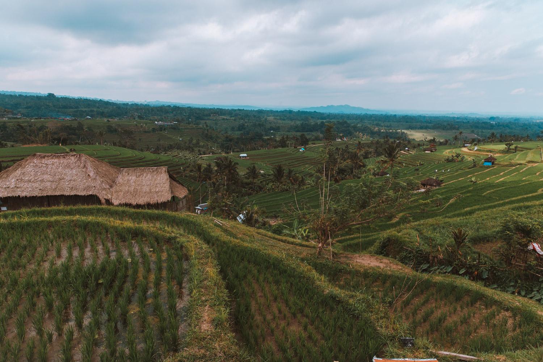 Bali1-1448.jpg