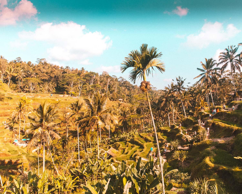 Bali2-2430.jpg